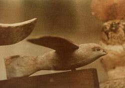 Saqqara-Bird