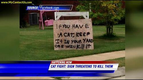 Cat-threat1