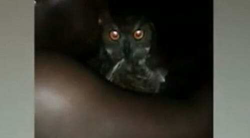 Owl-drunk