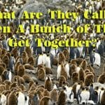 Collective Nouns - A Group of People, Animals and Things