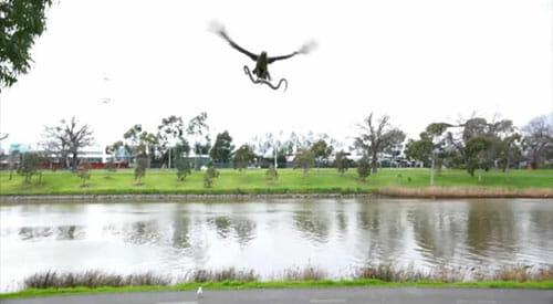 hawk-snake
