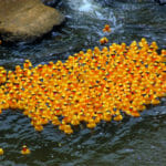 What Happens When We Lose 28,000 Rubber Duckies At Sea?