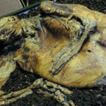 The Gruesome Story Of The Lindow Bog Bodies
